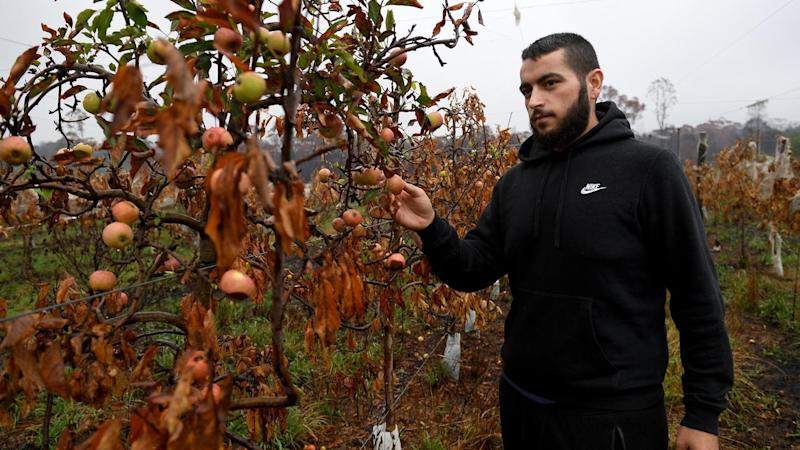James Tadrosse inspects burnt apple trees on his family's fruit farm at Bilpin, west of Sydney