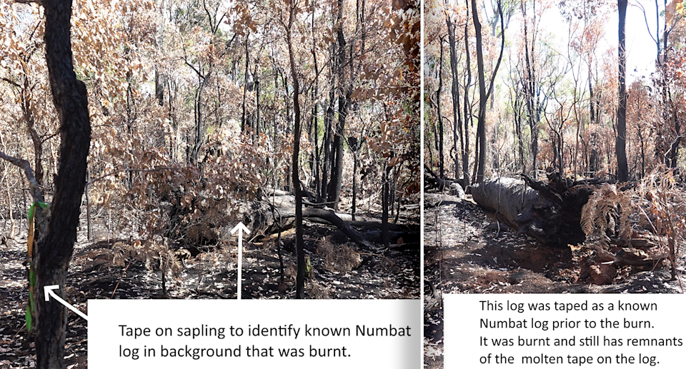Two images of numbat habitat burnt by the fires. There are notes from Mr Smart at the bottom of the images.