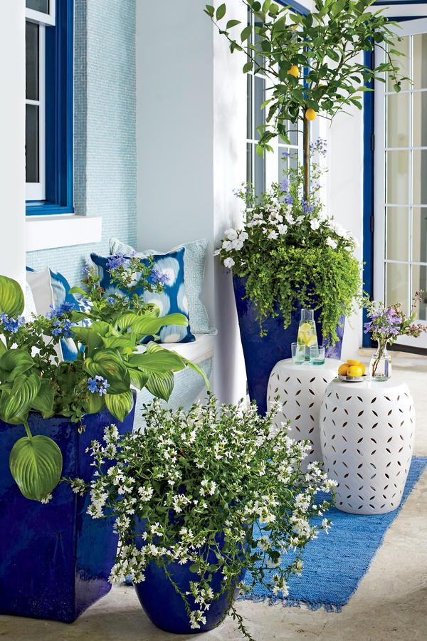 """<p>An effortlessly cool vibe is achieved here with threeoversize cobalt-glazed containers,spilling with pale blue, white, and green blooms to complement the bright yellow hue of the""""Meyer"""" lemon tree.</p>"""