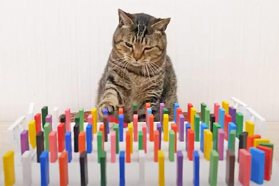 Cats and Dominoes