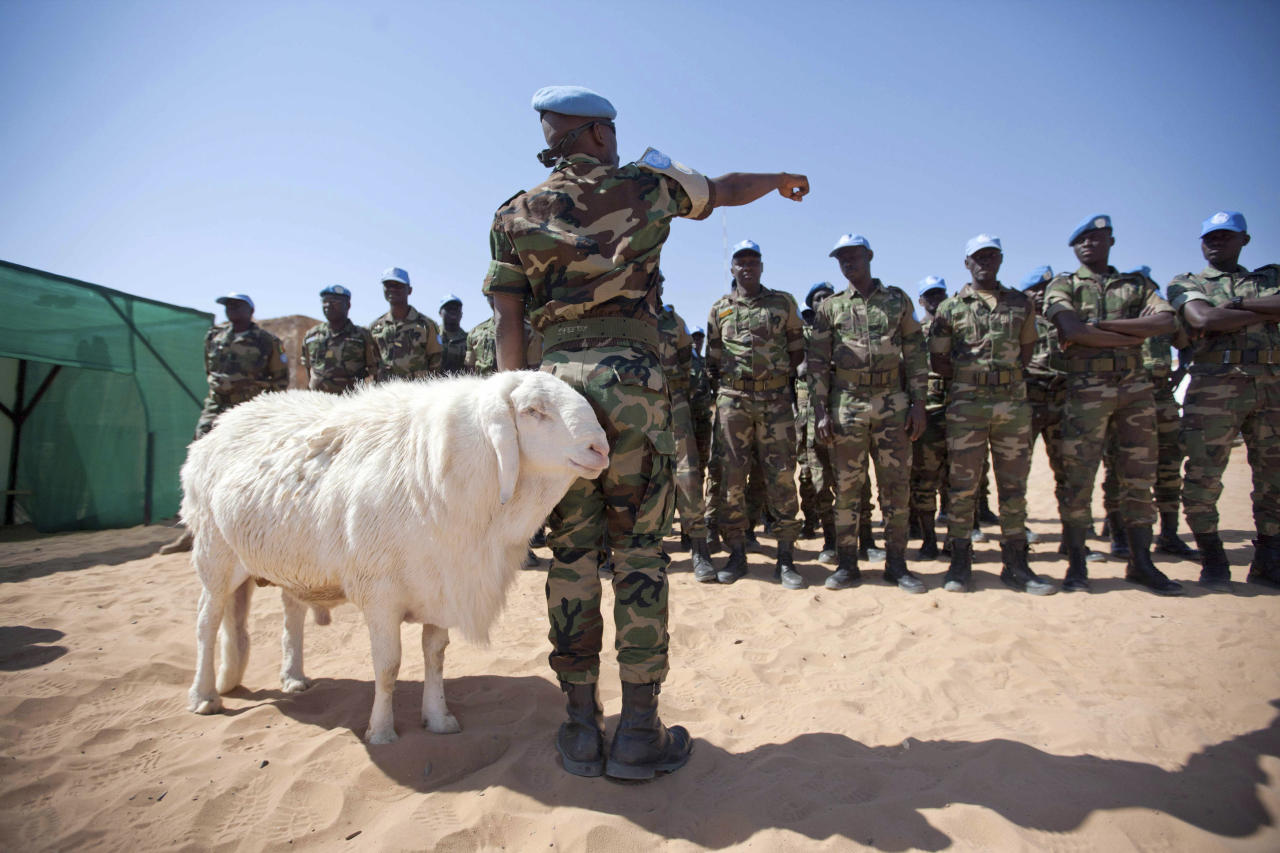A sheep passes Senegalese troops standing in formation for the arrival of African Union?United Nations mission in Darfur (UNAMID) Force Commander  Lieutenant General Patrick Nyamvumba of Rwanda at the Umm Baru team site February 22, 2012. REUTERS/UNAMID/Albert Gonzalez Farran/Handout (SUDAN - Tags: POLITICS ANIMALS) FOR EDITORIAL USE ONLY. NOT FOR SALE FOR MARKETING OR ADVERTISING CAMPAIGNS. THIS IMAGE HAS BEEN SUPPLIED BY A THIRD PARTY. IT IS DISTRIBUTED, EXACTLY AS RECEIVED BY REUTERS, AS A SERVICE TO CLIENTS
