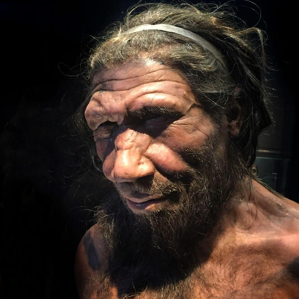 A team of researchers has discovered bacteria on the teeth of Neanderthals, and it points to the extinct subspecies having a carb-rich diet.