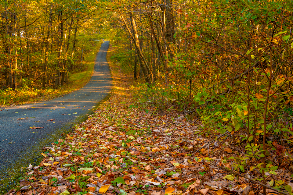 """<p>Because New Jersey is a rather small state, you can visit just about any part of it during the fall and get an eyeful of changing leaves. However, state tourism suggests checking out <a href=""""https://www.visitnj.org/nj-all-beaches/high-point-state-park"""" rel=""""nofollow noopener"""" target=""""_blank"""" data-ylk=""""slk:High Point State Park"""" class=""""link rapid-noclick-resp"""">High Point State Park</a> in Sussex in either <a href=""""https://www.visitnj.org/article/autumn-foliage-best-places-to-see-fall-leaves-new-jersey"""" rel=""""nofollow noopener"""" target=""""_blank"""" data-ylk=""""slk:late September or early October"""" class=""""link rapid-noclick-resp"""">late September or early October</a>, because it's home to the highest elevation and offers some extra stunning views.</p>"""