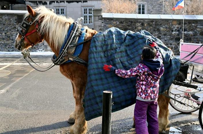 A coachwoman puts a cover on her horse while waiting for tourists in freezing temperatures in Old Montreal, Quebec, Canada on December 22, 2019.Montreal's horse-drawn carriages will be taken off the roads on December 31, ending a long feud between the city and coachmen and a quaint means of local travel that dates back to the 1600s. (AFP Photo/Eric THOMAS)