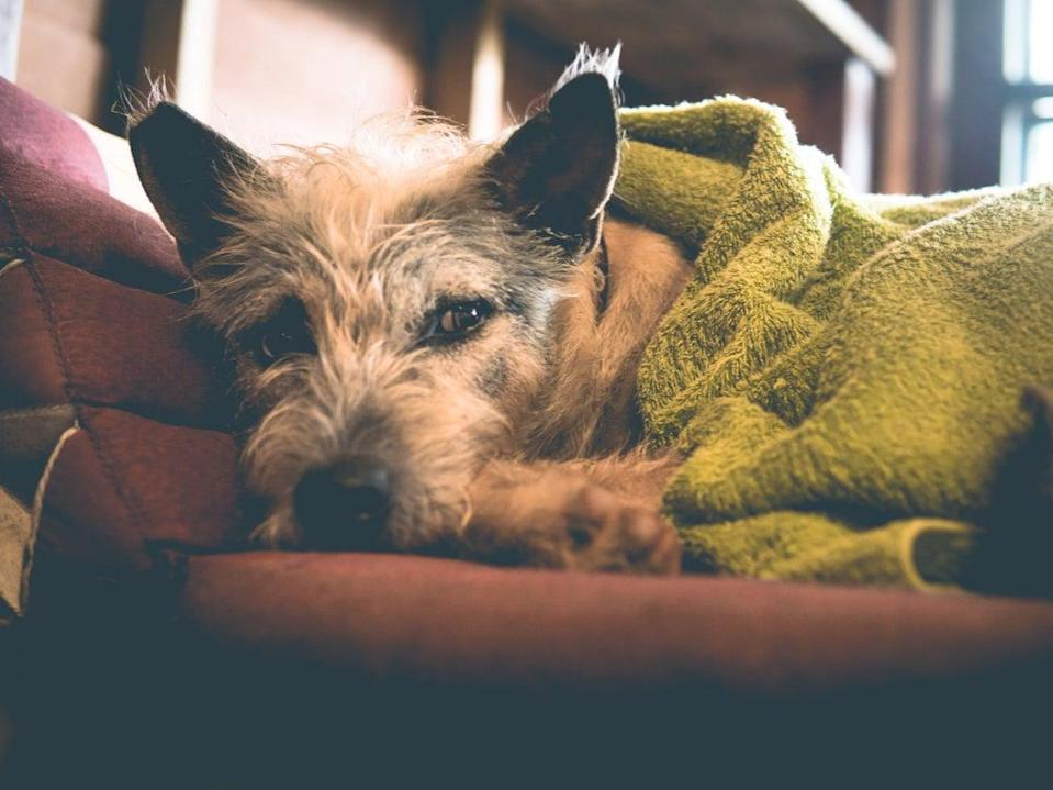 Keep dogs and cats calm during a thunderstorm by providing them with a safe space and keeping calm yourself (Getty Images/iStockphoto)