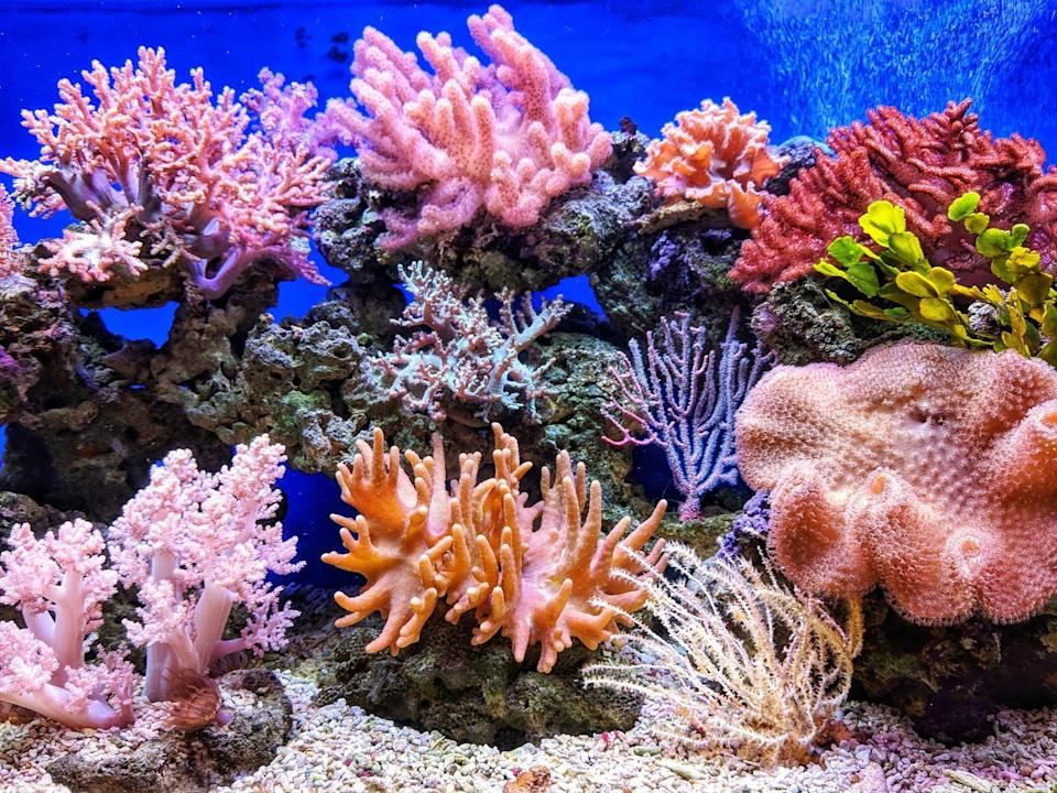 Allen Coral Atlas: Everything about the first global coral reef map