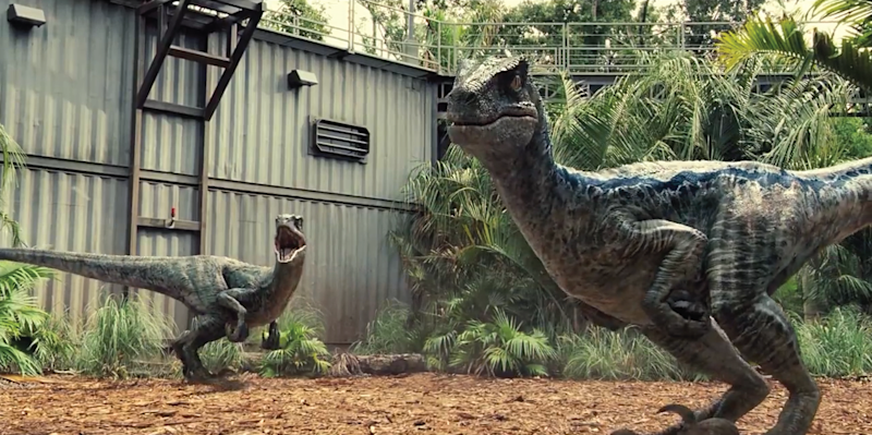 The raptors in 'Jurassic World'.