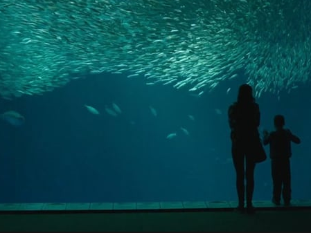 The Big Little Lies trailer features Shailene Woodley's Jane and her son at the famous aquarium. Photo: HBO