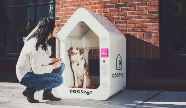 PHOTO: DogSpot was founded by a Brooklyn-based dog owner. (DogSpot)