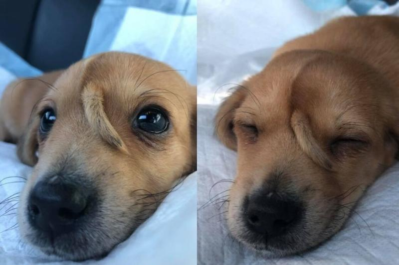 Dog or Unicorn? Meet Narwhal, the Puppy with a Tail Growing Out of His Forehead