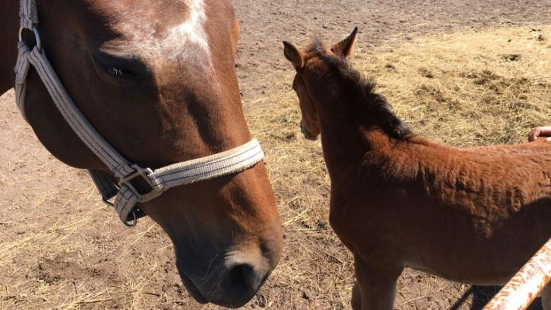 Contagious horse disease hits New Brunswick, cancels equestrian events