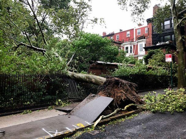 PHOTO: A tree uprooted by high winds lays on a fence in the Brooklyn Heights neighborhood in New York City, Aug. 4, 2020. (David Crary/AP)