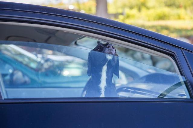 Two dogs have died after being stuck in a hot car. Source: Getty Images, file