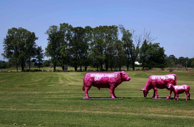 """Sculptures in the shape of cows with the words """"Happy Valentine's Day"""" and """"Be my Valentine, please"""" painted on their sides, are pictured at a paddock on the outskirts of the town of Nowra, located 150 km (93 miles) south of Sydney February 10, 2013. Valentine's Day is celebrated on February 14. Picture taken February 10. REUTERS/David Gray (AUSTRALIA - Tags: SOCIETY)"""