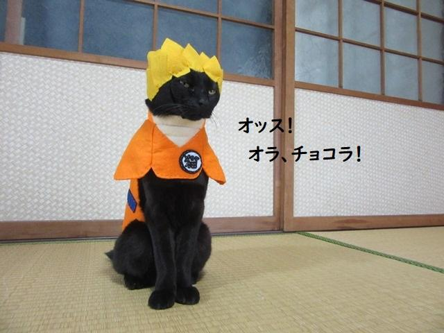 Cat cosplayer from Japan, Chocola, whose owner has hand-made 114 costumes for it, as Sun Goku from Dragonball. (Photo: Twitter/@kigurumicyokor1)