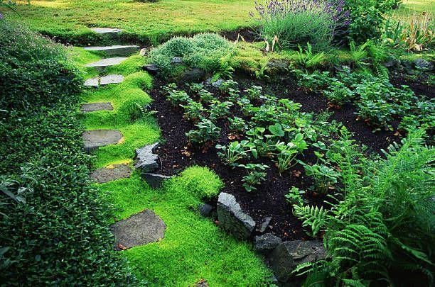 "<p>The soft moss-like foliage of this plant forms a dense mat underfoot. In spring, tiny white flowers add to its ethereal beauty. While it prefers full sun, it needs regular moisture, especially during hot months.</p><p><a class=""link rapid-noclick-resp"" href=""https://go.redirectingat.com?id=74968X1596630&url=https%3A%2F%2Fwww.etsy.com%2Flisting%2F719105066%2Flive-moss-plant-irish-moss-scotch-moss&sref=https%3A%2F%2Fwww.goodhousekeeping.com%2Fhome%2Fgardening%2Fg32440508%2Fbest-ground-cover-plants%2F"" rel=""nofollow noopener"" target=""_blank"" data-ylk=""slk:SHOP NOW"">SHOP NOW</a></p>"
