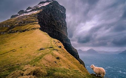The sheep don't seem to mind the weather - Credit: Getty
