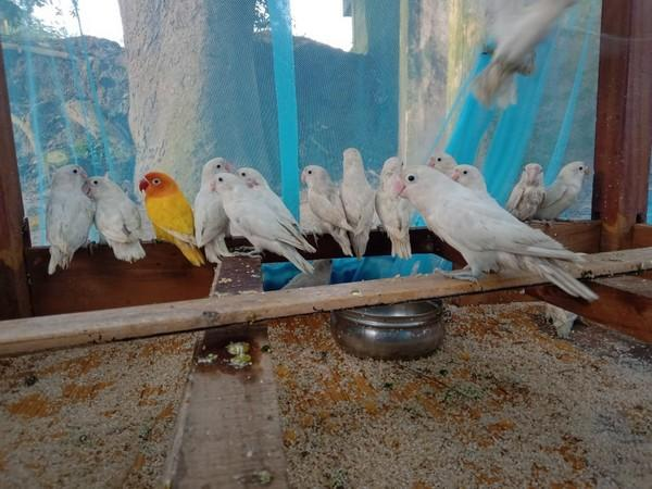 36 birds were seized by the Border Security Force in Kolkata.