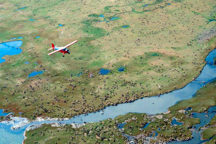 An airplane flies over caribou on the coastal plain of the Arctic National Wildlife Refuge in northeast Alaska.