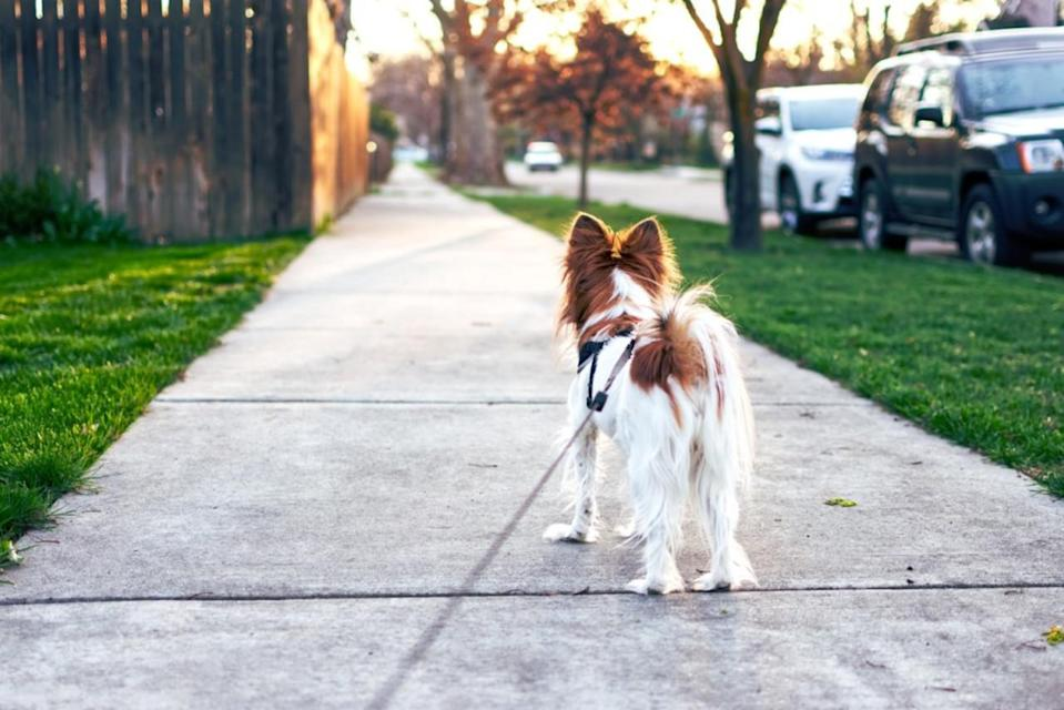 Ensure your pup's paws are protected in extreme heat