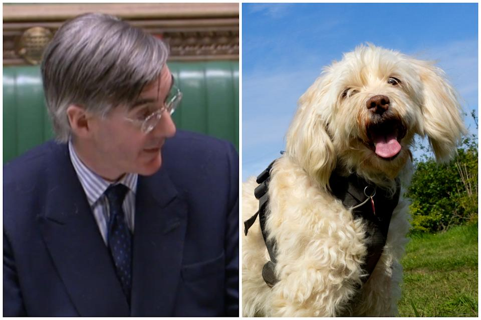 Jacob Rees-Mogg has ruled out tougher sentences for dog thieves. (Parliamentlive.tv/Getty Images)
