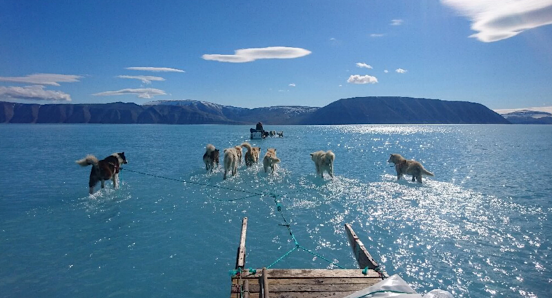 A number of sled dogs run through blue water in front of mountains in Greenland. Source: Steffan Olsen/Supplied