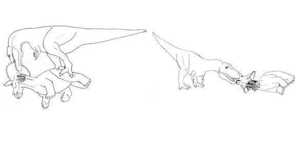 Step two: tear the head off to expose the tasty neck muscles (left). Step three: nibble on the soft flesh of Triceratops' face (right).