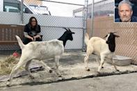 """<p>Not kidding around, the former <em>Daily Show</em> host helped recover and rehome <a href=""""https://people.com/pets/jon-stewart-rescues-goats-subway-tracks-nyc/"""" rel=""""nofollow noopener"""" target=""""_blank"""" data-ylk=""""slk:two lone goats"""" class=""""link rapid-noclick-resp"""">two lone goats</a> found wandering the New York City subway system in August 2018. Animal care officers got the goats off the tracks, and <a href=""""https://people.com/pets/jon-stewart-rescues-goats-subway-tracks-nyc/"""" rel=""""nofollow noopener"""" target=""""_blank"""" data-ylk=""""slk:phoned Farm Sanctuary"""" class=""""link rapid-noclick-resp"""">phoned Farm Sanctuary</a> – of which Stewart's wife Tracey is a board member – to get the creatures to safer pastures.</p> <p>In fact, Stewart drove the goats out of the Big Apple to their new sanctuary home upstate himself. The animal rescue was all in a day's work for the Stewart family – the former late-night host and his wife <a href=""""https://people.com/pets/jon-stewart-and-wife-announce-plans-to-open-animal-sanctuary/"""" rel=""""nofollow noopener"""" target=""""_blank"""" data-ylk=""""slk:bought a farm"""" class=""""link rapid-noclick-resp"""">bought a farm</a> to open a New Jersey branch of Farm Sanctuary in 2015.</p>"""