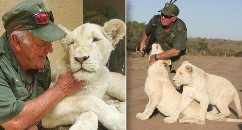 West Mathewson with his two white lions at his Lion Tree Top Lodge in South Africa