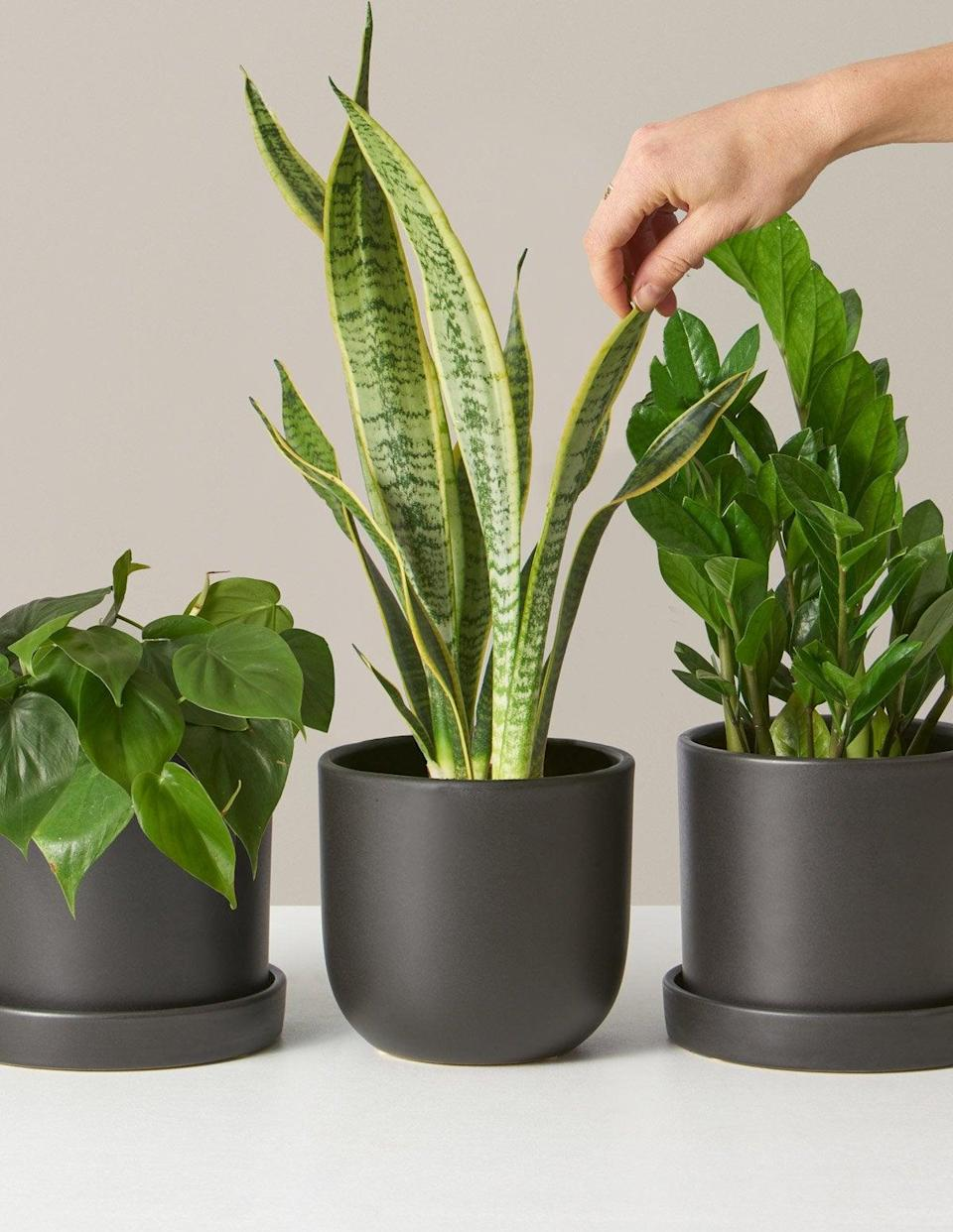 """<strong><h3><h2>The Sill </h2></h3></strong><br><strong>Plant Subscription</strong><br>Since we do not subscribe to dad stereotypes, here is a trendy plant subscription for your green-thumbed father. An R29-reader favorite, The Sill sends one beginner-level plant surprise (in an aesthetically pleasing planter) complete with detailed care instructions to your chosen giftee's doorstep each month. <br><br>Shop <strong><em><a href=""""https://www.thesill.com/collections/plant-subscription"""" rel=""""nofollow noopener"""" target=""""_blank"""" data-ylk=""""slk:The Sill"""" class=""""link rapid-noclick-resp"""">The Sill</a></em></strong><br><br><strong>The Sill</strong> Classic Plant Subscription, $, available at <a href=""""https://go.skimresources.com/?id=30283X879131&url=https%3A%2F%2Fwww.thesill.com%2Fproducts%2Fclassic-subscription-box"""" rel=""""nofollow noopener"""" target=""""_blank"""" data-ylk=""""slk:The Sill"""" class=""""link rapid-noclick-resp"""">The Sill</a>"""