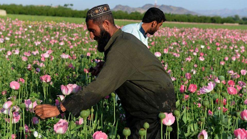 The major sources of the Taliban's money