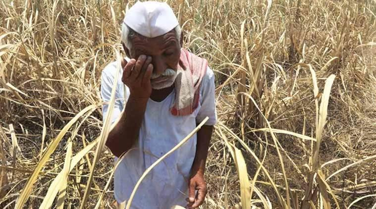 Farmers suicides, Farmers suicides during UPA rule, parshottam rupala, agriculture minister narendra singh tomar, Farmers suicides UPA, Farmers suicides BJP, farmer loan waiver, india news, Indian express