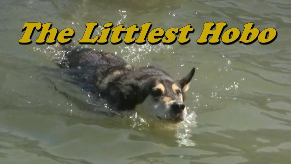 A number of people have taken to Twitter to voice confusion, and to post GIFs of the classic Canadian television series The Littlest Hobo. (YouTube)