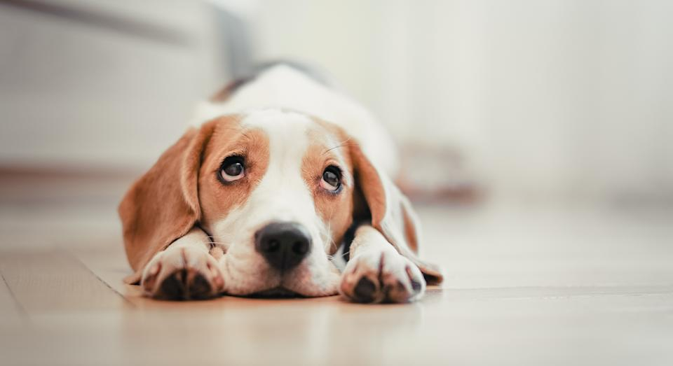 Warm your pet up this winter with a heated pet bed [Image: Getty]