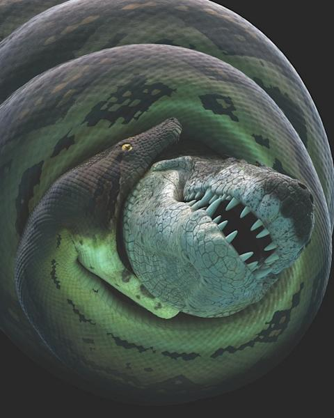 "An animation from a Smithsonian Channel documentary shows a dyrosaur being constricted by the ""monster snake"" Titanoboa."