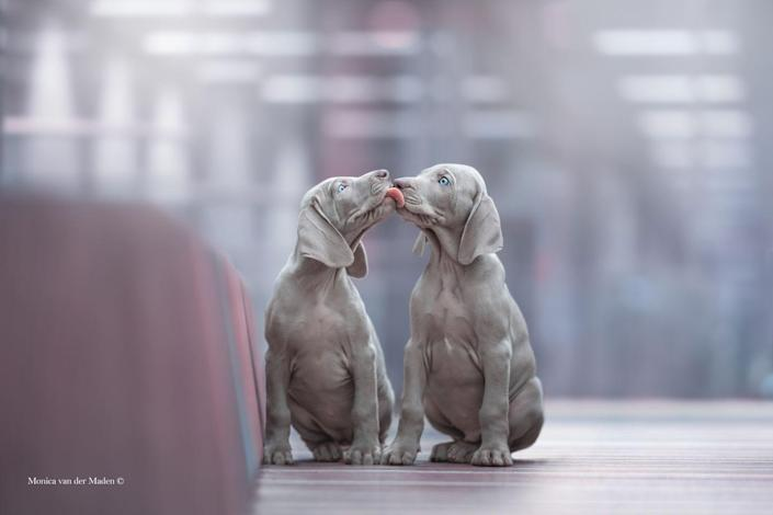 <p>Macy and Vino were captured kissing in a shopping centre for this winning shot. </p>
