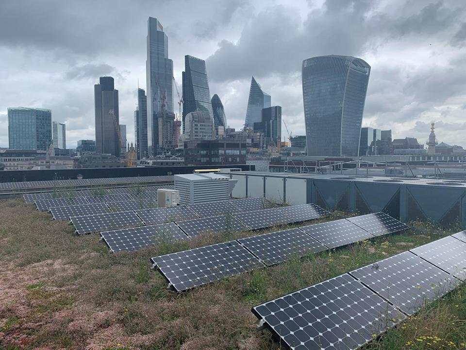 Nomura's rooftop garden in the City of London hosts 159 plant species (Daisy Dunne)