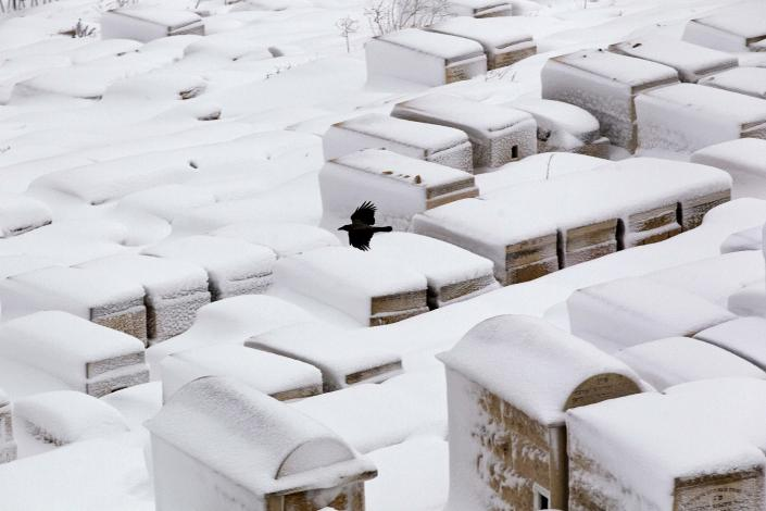 A crows flies over the snow-covered Mount of Olives cemetery outside Jerusalem's Old City February 20, 2015. Snow covered Jerusalem and mountainous areas of Israel early Friday morning and the education ministry closed schools for the day. (REUTERS/Ronen Zvulun)