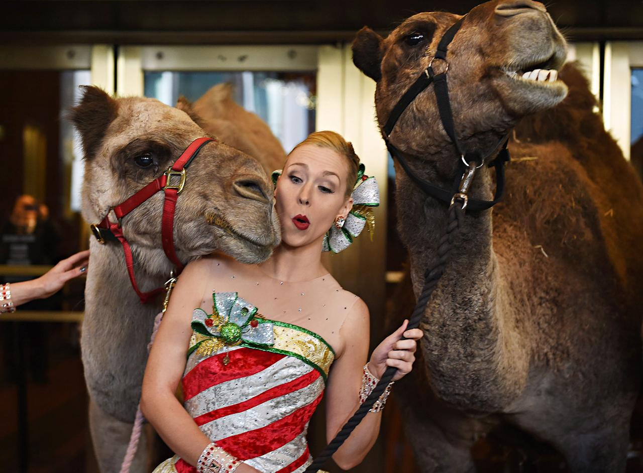 "<p>Radio City Rockette Lauren Renck is nudged by a camel right before Cardinal Timothy Dolan, Archbishop of New York, blesses the animals in the Radio City Christmas Spectacular, Nov. 1, 2016, in New York. The animals will take part in the ""Living Nativity"" scene in the annual production of 'The Christmas Spectacular starring the Radio City Rockettes,' ahead of their rehearsals for the show before it opens Nov. 11, 2016. (Timothy A. Clary/AFP/Getty Images) </p>"