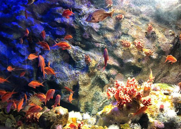 ▲ It is surprising that there are many colorful creatures in the cold sea, such as crimson anemones and Brown hakeling