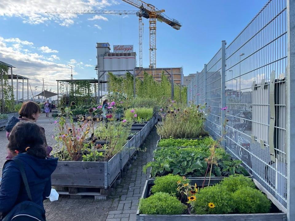 The Gemüsewerft urban gardening project located in Bremen, surrounded by building projects. Credit: Gemma Bradley.