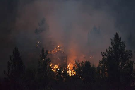 Trees are consumed by flames from the Carlton Complex Fire near Methow, Washington July 18, 2014. REUTERS/David Ryder