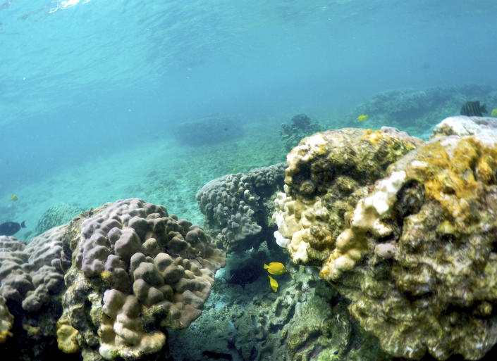 FILE - This Sept. 12, 2019, file photo shows bleaching coral in Kahala'u Bay in Kailua-Kona, Hawaii. Recent flooding in Hawaii caused widespread and obvious damage. But extreme regional rain events that are predicted to become more common with global warming do not only wreak havoc on land, the runoff from these increasingly severe storms is also threatening Hawaii's coral reefs. (AP Photo/Caleb Jones, File)