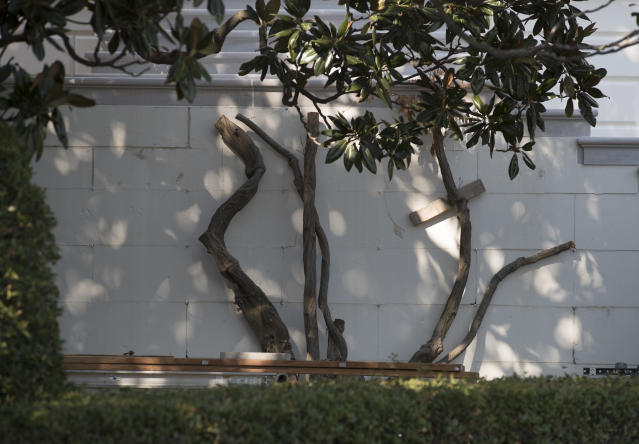 <p>What is left of the wisteria after is was cut back along South Portico's news renovated staircase is seen at the White House in Washington, Tuesday, Aug. 22, 2017, during a media tour. (Photo: Carolyn Kaster/AP) </p>
