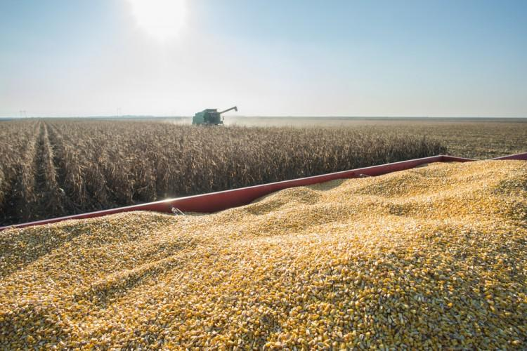 corn, harvester, harvesting, field, ripe, monoculture, dust, agriculture, autumn, machinery, yellow, trailer, crop, combine, farm, sun, landscaped, vehicle, equipment, rural, cultivated