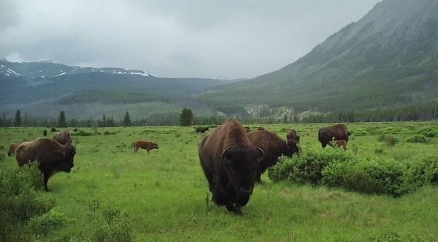 Submitted by Parks Canada
