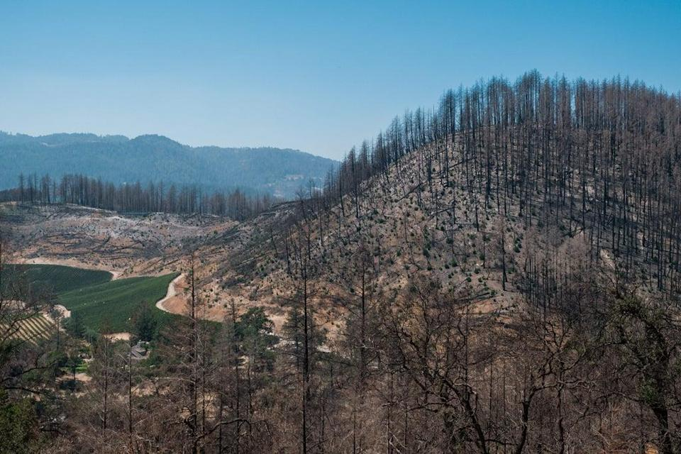 A scorched hillside from last year's Glass fire is seen near Angwin, California (AFP via Getty Images)