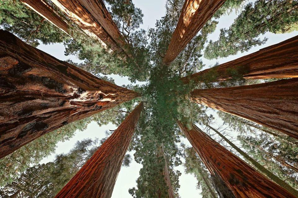 "<p>Get ready to feel tiny—<em>really </em>tiny—when you walk along the <a href=""https://www.tripadvisor.com/Attraction_Review-g143050-d6650757-Reviews-Congress_Trail-Sequoia_and_Kings_Canyon_National_Park_California.html"" rel=""nofollow noopener"" target=""_blank"" data-ylk=""slk:Congress Trail"" class=""link rapid-noclick-resp"">Congress Trail</a> and you're dwarfed by the giant Sequoias. The paved loop starts at the famed General Sherman Tree, the largest tree in the world.</p><p><a class=""link rapid-noclick-resp"" href=""https://go.redirectingat.com?id=74968X1596630&url=https%3A%2F%2Fwww.tripadvisor.com%2FAttraction_Review-g143050-d6650757-Reviews-Congress_Trail-Sequoia_and_Kings_Canyon_National_Park_California.html&sref=https%3A%2F%2Fwww.redbookmag.com%2Flife%2Fg34357299%2Fbest-hikes-in-the-us%2F"" rel=""nofollow noopener"" target=""_blank"" data-ylk=""slk:PLAN YOUR HIKE"">PLAN YOUR HIKE</a></p>"