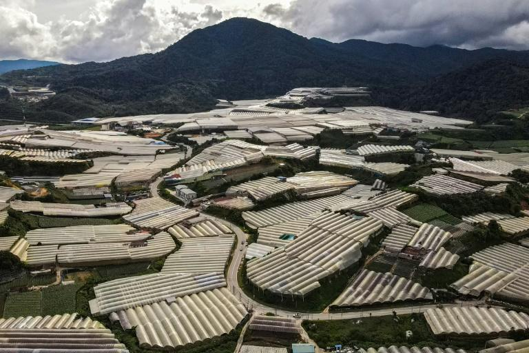 Malaysia imposed a new lockdown at the start of June, dealing a fresh blow to farmers in the highlands