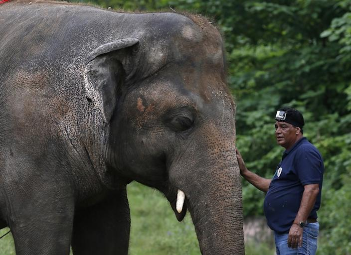 A veterinary from the international animal welfare organization 'Four Paws' offers comfort to an elephant named 'Kaavan' during his examination at the Maragzar Zoo in Islamabad, Pakistan, Friday, Sept. 4, 2020. The team of vets are visiting Pakistan to assess the health condition of the 35-year-old elephant before shifting him to a sprawling animal sanctuary in Cambodia. (AP Photo/Anjum Naveed)